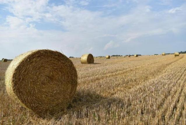 HARVESTING CAMPAIGN OF GRAIN CROPS HAS BEEN COMPLETED IN DOLGOVGROUP AGRICULTURAL HOLDING COMPANY