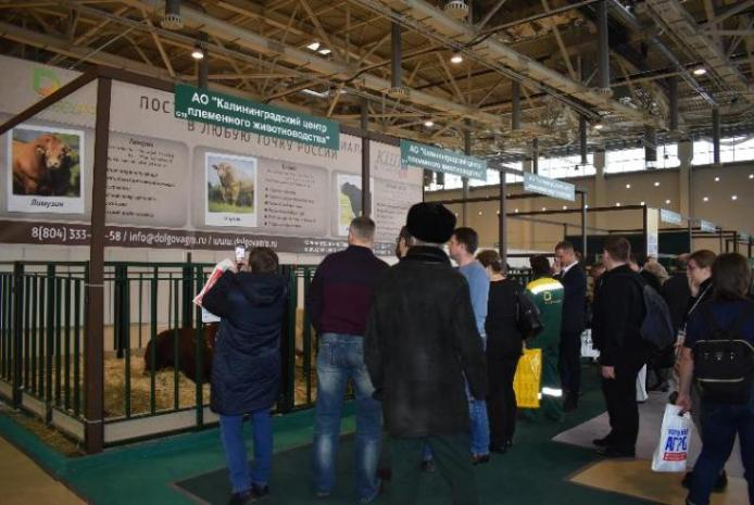 BREEDING ANIMALS OF THE HOLDING COMPANY ARRIVED AT THE INTERNATIONAL EXHIBITION