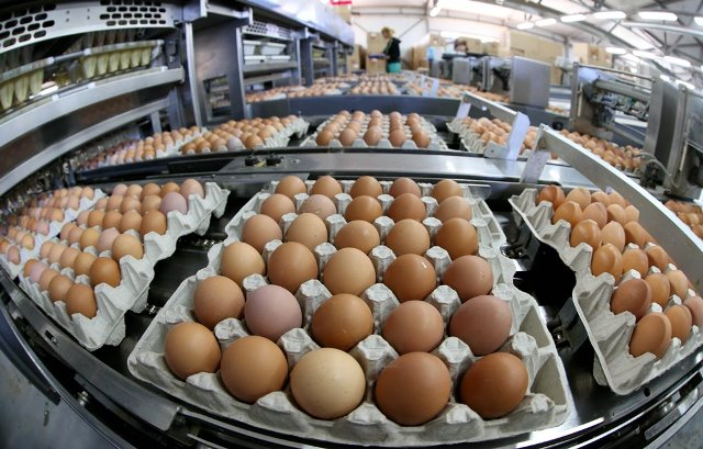 GURIEVSKAYA POULTRY FACTORY PRODUCED 180 MILLION EGGS IN 2017